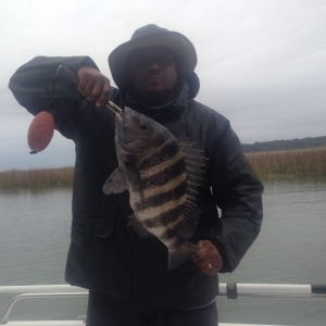Shannon Jackson with a Nice sheepshead!
