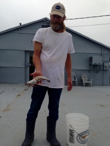 Jay from Nelson's Shrimp Dock next with the largest tiger shrimp he has seen (1/2 lb).